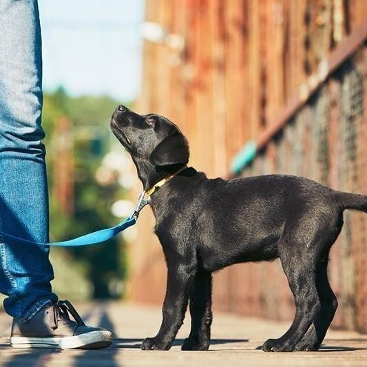 18 Most Trainable Dog Breeds