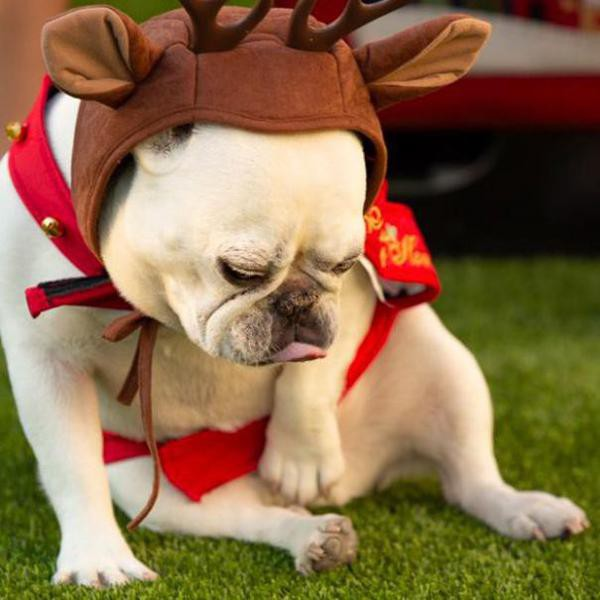Funniest Dog Accounts on Twitter