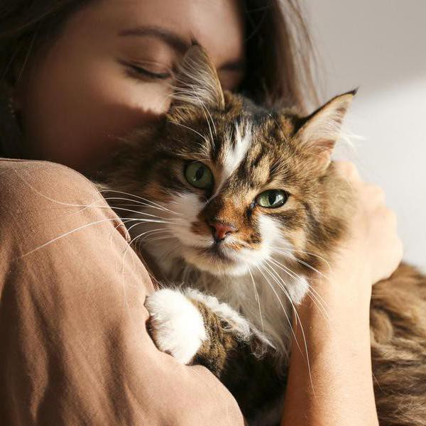 25 Emotional Support Cat Breeds That Double as Therapists