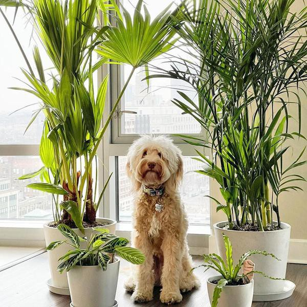 These Are the Best Pet-Friendly Plants