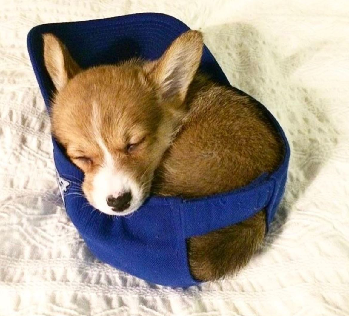 Ridiculously Cute Photos of Puppies Sleeping