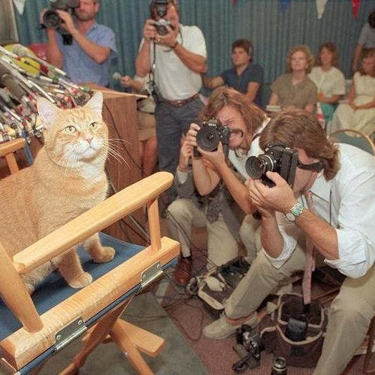 40 Adorable Vintage Photos of Cats