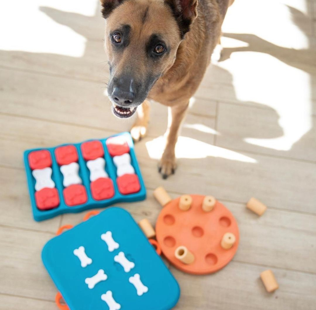 21 Best Dog Puzzle Toys to Make Your Pet Smarter