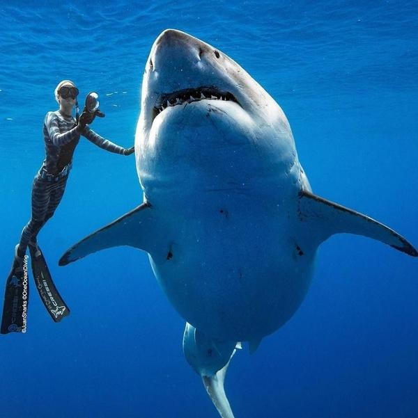 Incredible Facts About Sharks