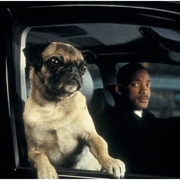 These Animal Actors Were the Best in Showbiz