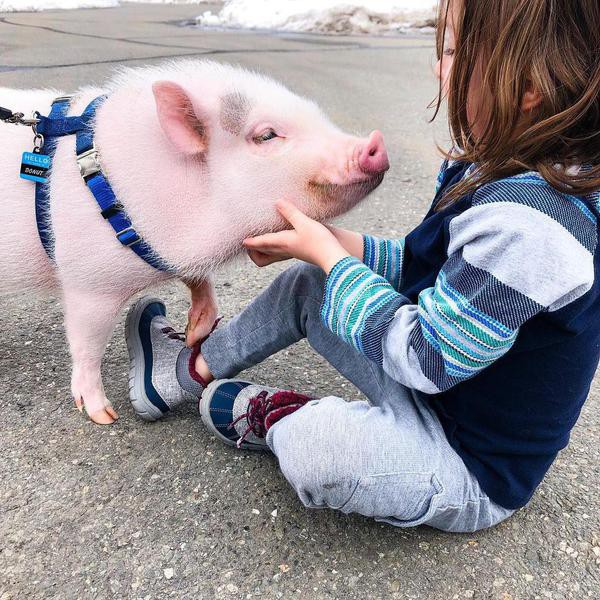 These Unique Pets and Their Owners Are Awesome