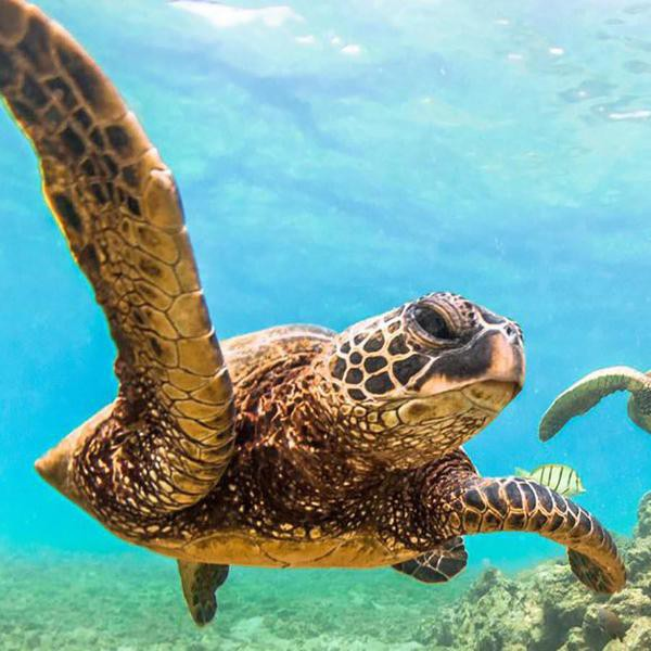 20 Amazing Tortoise, Terrapin and Turtle Facts