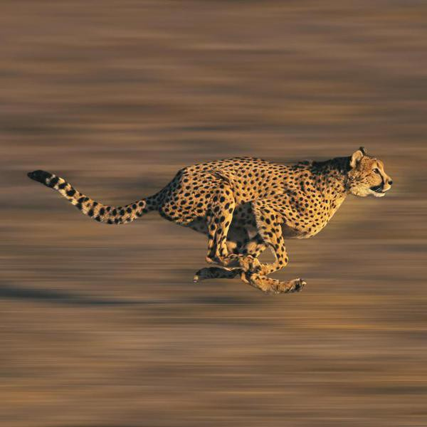 25 Fastest Animals in the World