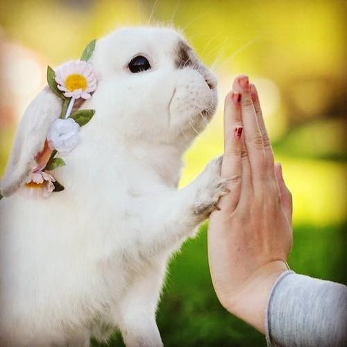 Teach Your Bunny Rabbit These 25 Fun Tricks