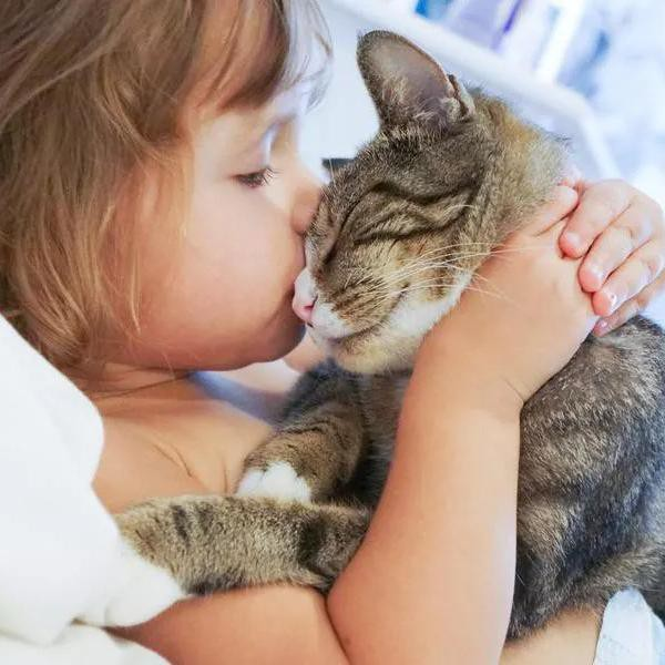 25 Greatest Cat Breeds for Kids