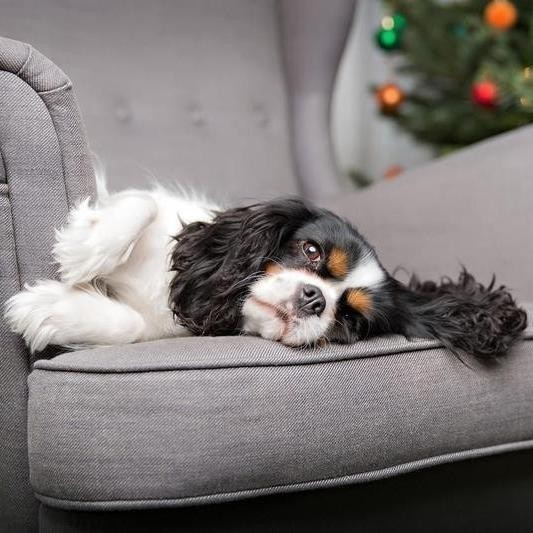 Lazy Dog Breeds That Are Happy to Lounge All Day