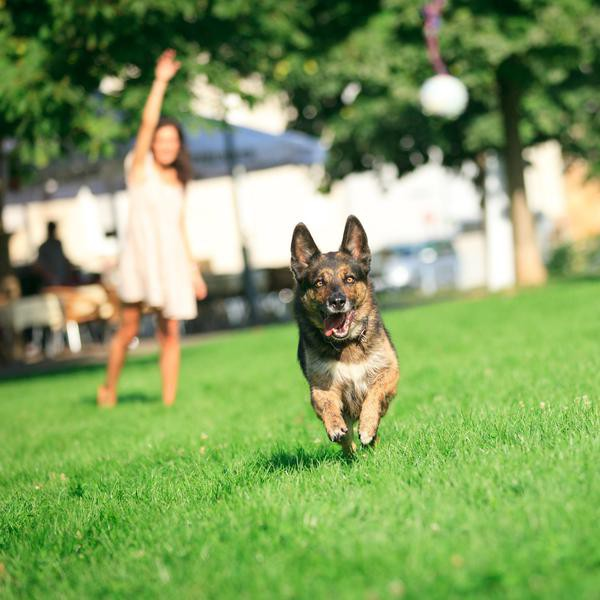 a young woman is throwing a ball for her dog to retrieve