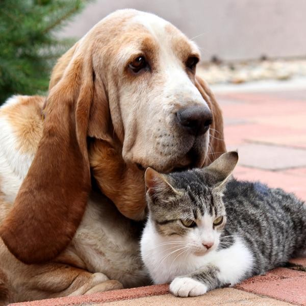 35 Dog Breeds That Live Well With Cats