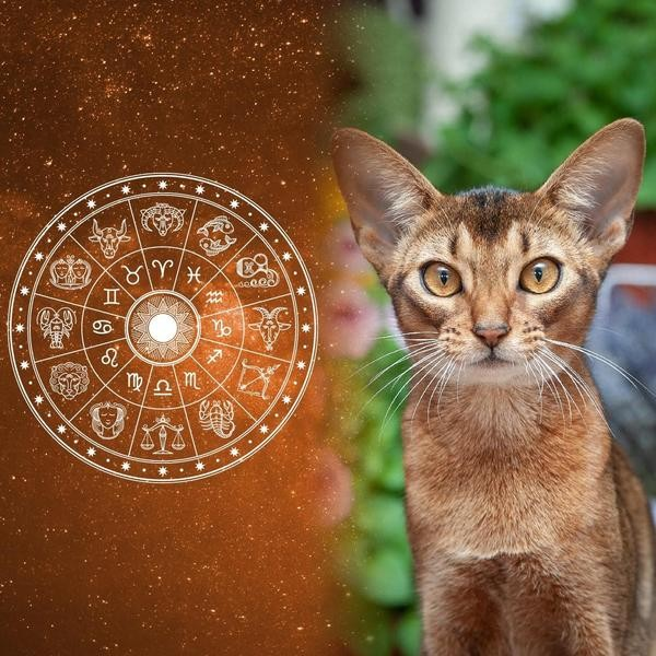 Cat Breeds for All 12 Horoscope Signs