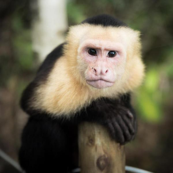 35 Fascinating Facts About Monkeys