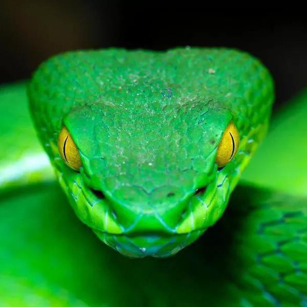 50 Facts About Snakes That Will Make You Love Them