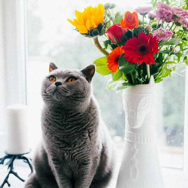15 Houseplants You May Not Know Are Toxic to Cats