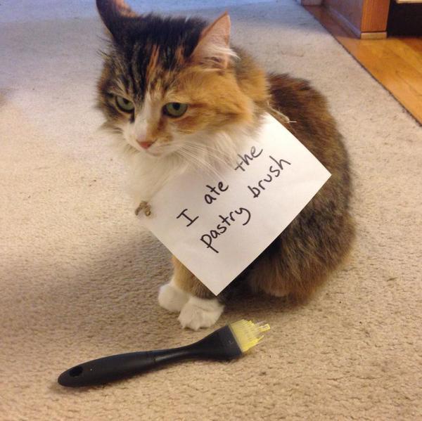 Hilarious Cat Shaming Photos