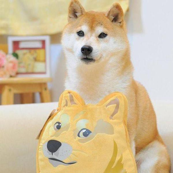 Craziest Doge Dog Breed Facts