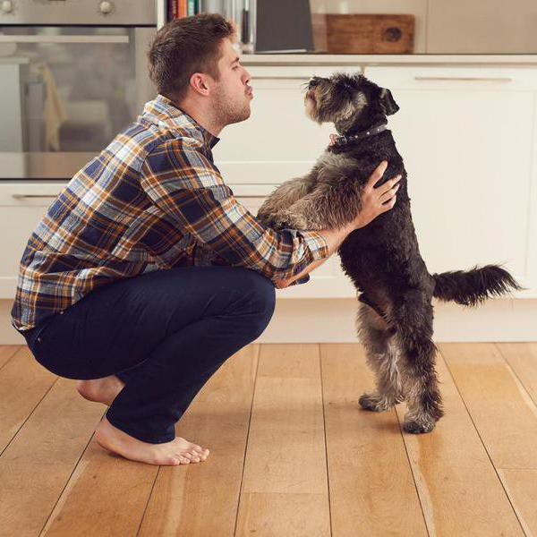 30 Surefire Dog-Training Tips and Techniques