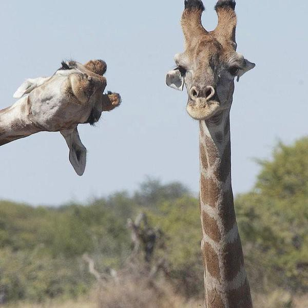 Hilarious Animal Photobombs That Are Truly Awesome
