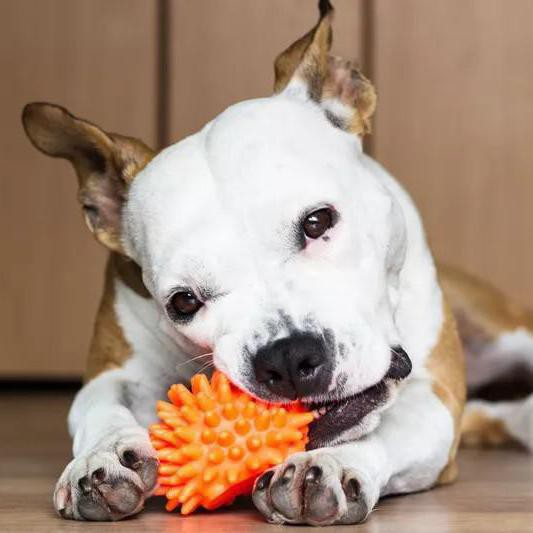 Dangerous Things Dogs Ate and Were Absolutely Fine