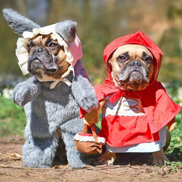Hilarious Dog Costumes That Will Make Your Day