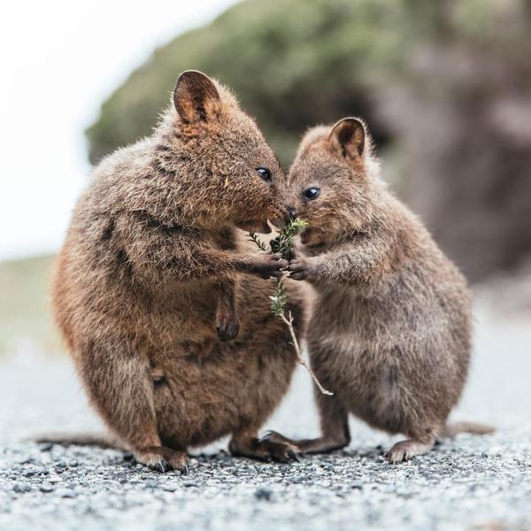 20 Adorable Kangaroo Species You've Probably Never Heard Of