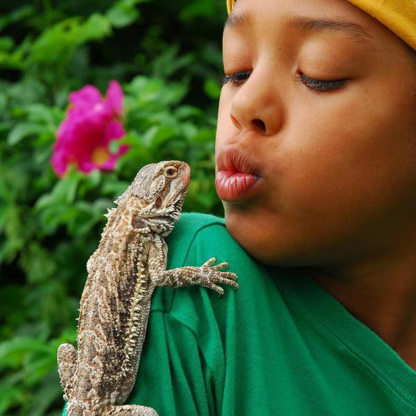 What Does a Pet Lizard Really Need to Survive?
