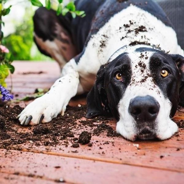 Most Dangerous Things for Dogs to Eat