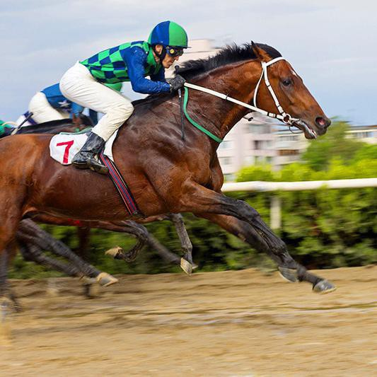 25 'Luckiest' Names of Real Racehorses