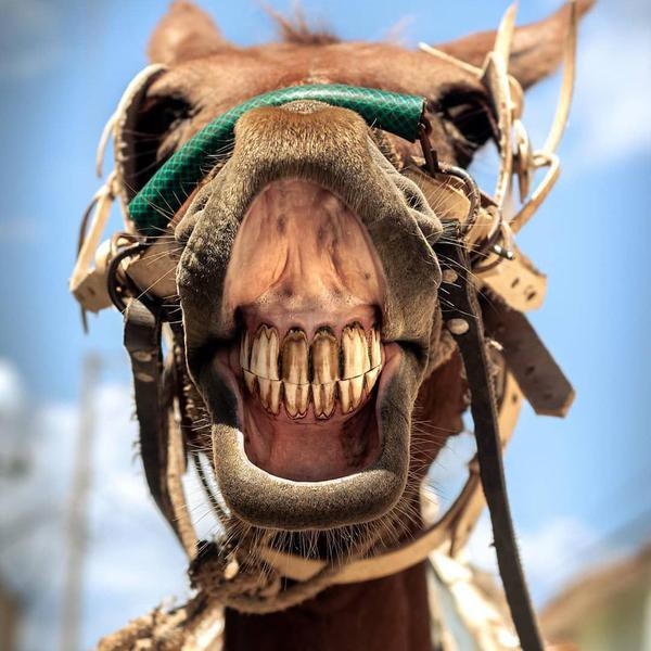 These Hilarious Photos of Horses Smiling Will Make Your Day