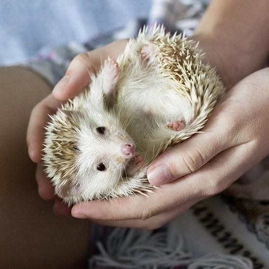 15 Unusual Small Pets for Kids to Own