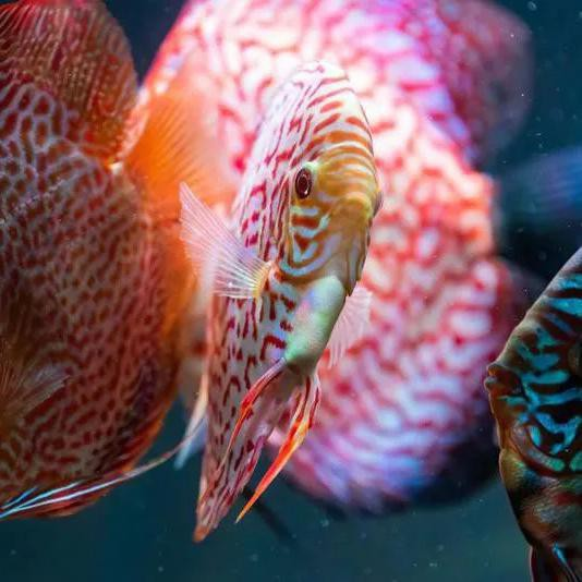 Most Expensive Fish You Can Own