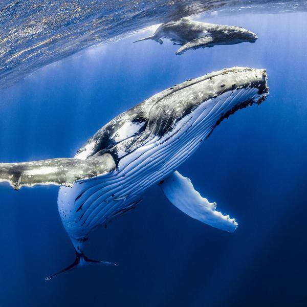 Most Breathtaking Photos of Underwater Life