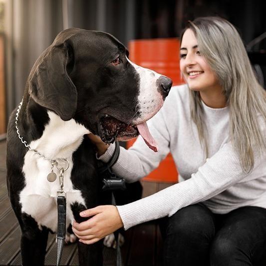 Dog Breeds Guaranteed to Make You Calmer