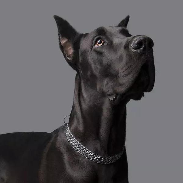 Most Unforgettably Huge Dog Breeds