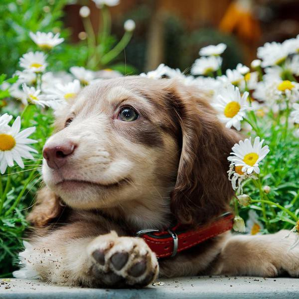 25 Cutest Dog Breeds, Ranked