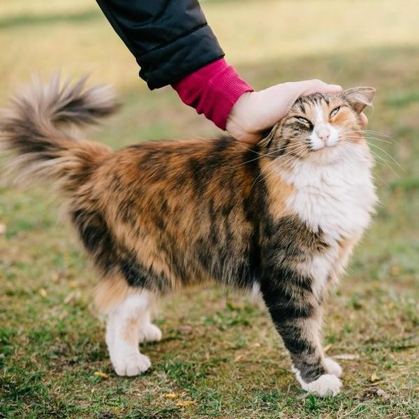 What Your Cat's Petting Style Says About Them