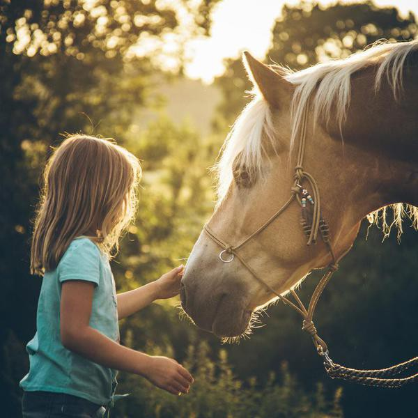Cute happy 6 years old Caucasian girl, cuddling her Haflinger horse or pony outdoor in nature with beautiful and idyllic summer sunlight of a low sun, shortly before sunset.