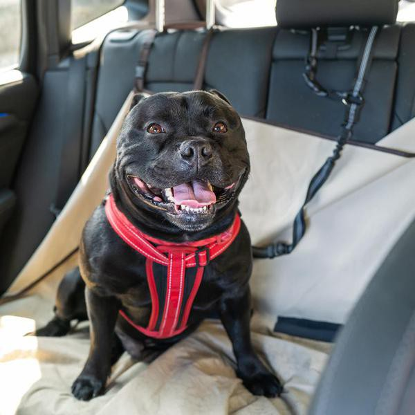 These Dog Car Harnesses Can Keep Your Pet Safe
