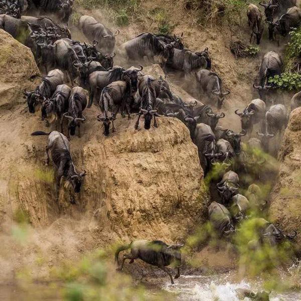 31 Stunning Photos of African Wildlife