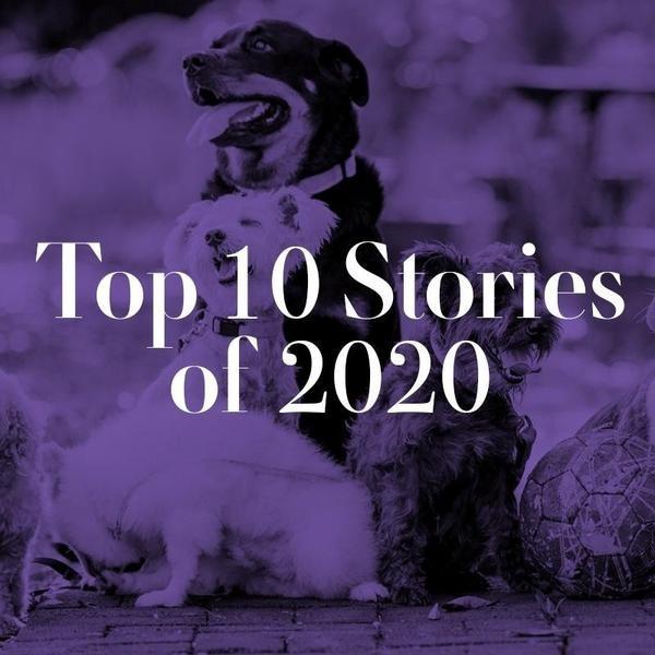 Always Pets' Top 10 Stories of 2020