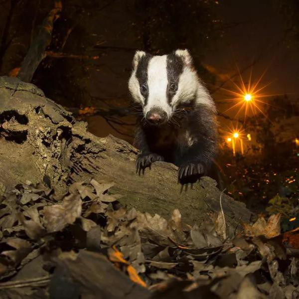 Amazing Photos of Nocturnal Animals