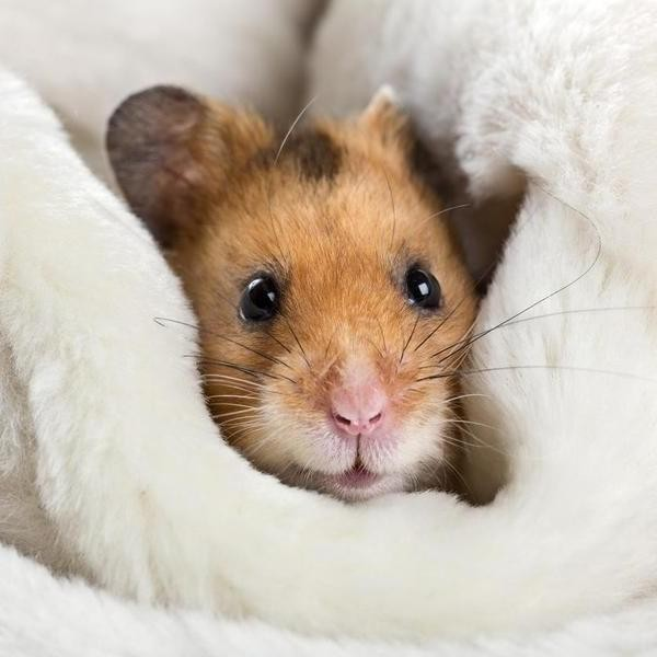Hamsters Are Fascinating — and These Facts Prove It