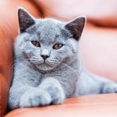 20 Best Boy Cat Names