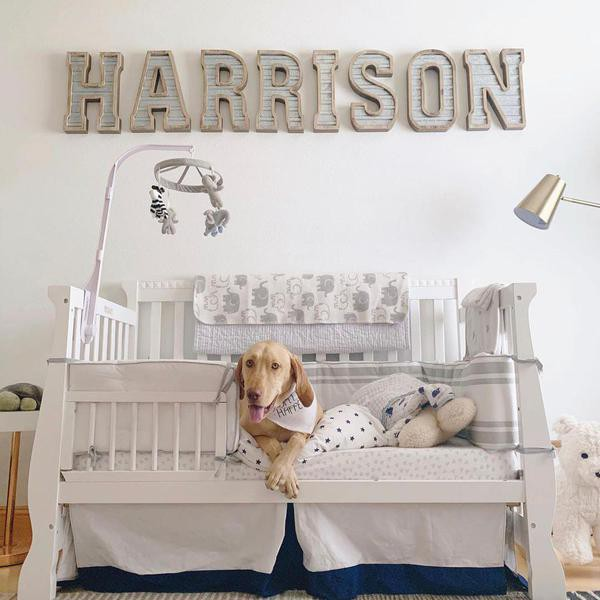Cute Dog Room Ideas That Are Easy to Create
