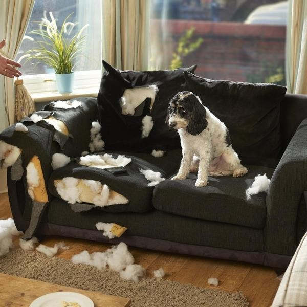 10 Dogs That Chew the Most: The Most Destructive Dog Breeds Revealed