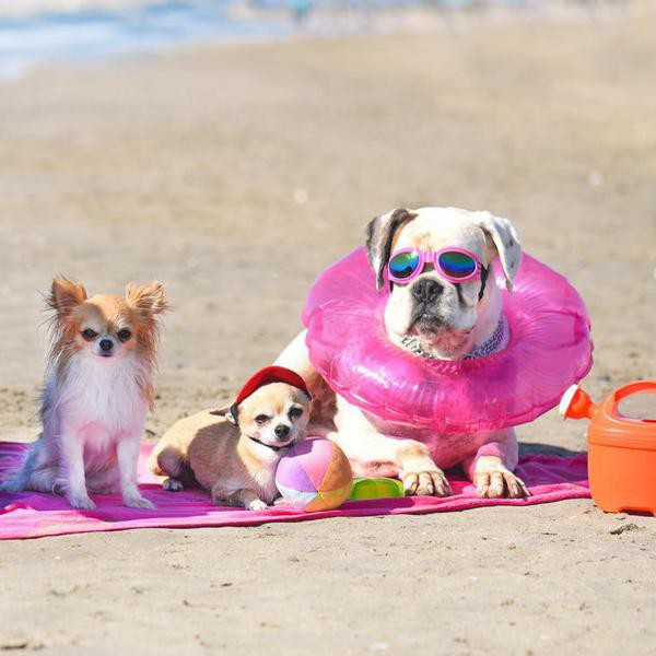 25 Best Dog Beaches to Visit With Your Pup