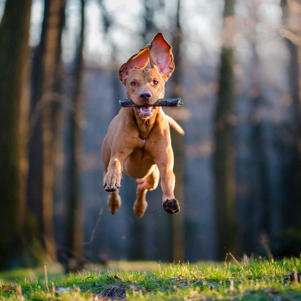 30 Ways to Make Your Dog Smarter